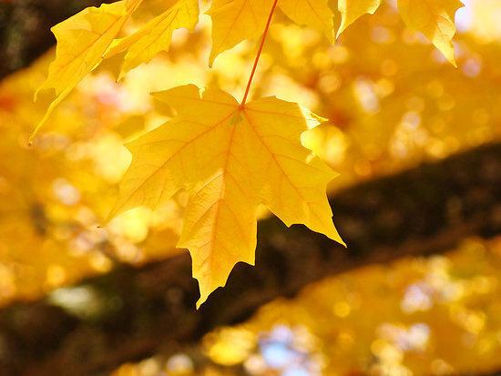 GOLD Fall Fest